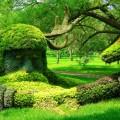 Most Unbelievable Plant Sculptures
